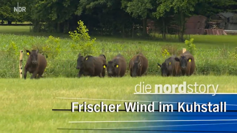 Viehzucht - Frischer Wind im Kuhstall | NDR